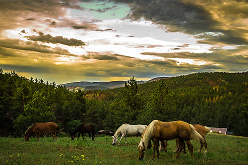 horses grazing in mountain pasture